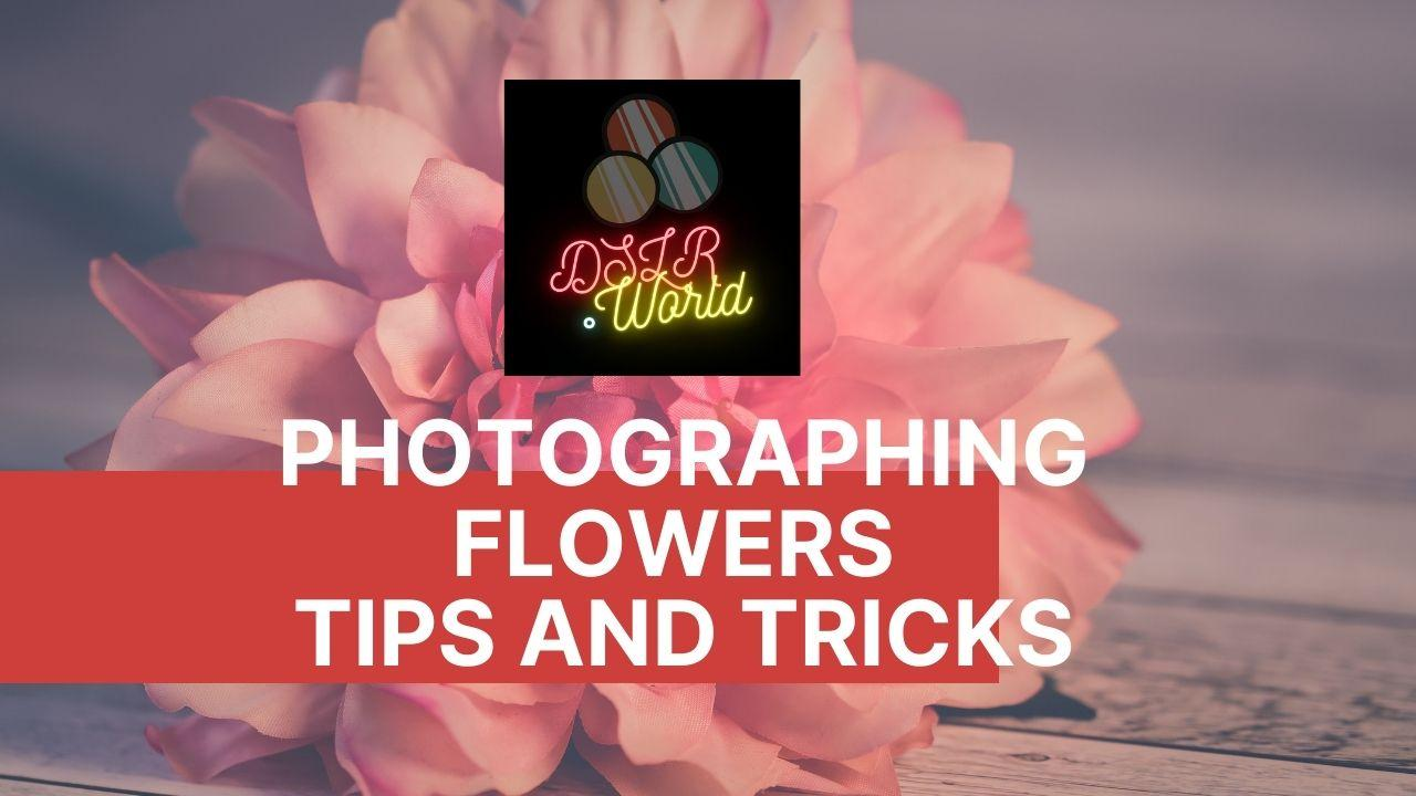 Photographing Flowers – Tips and Tricks
